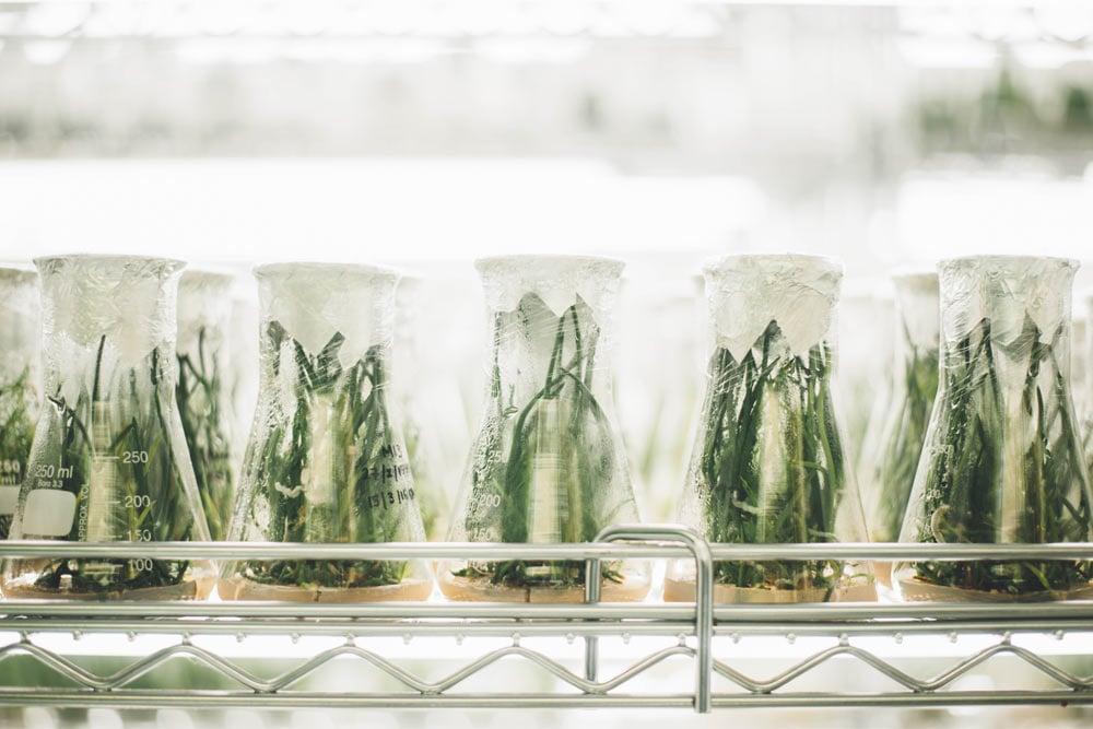 Plants in Jars in a Medical Fridge